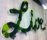 Эко-логотип из стабилизированных растений и мха