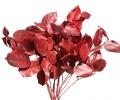 Стабилизированный салал красного цвета
