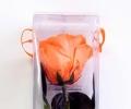 Амароза оранжевая