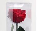 Амароза красная