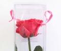 Амароза ярко-розовая