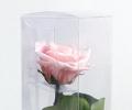 Амароза нежно-розовая