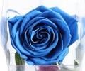 Стабилизированный бутон розы