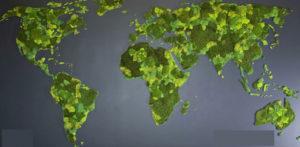 Карта мира из стабилизированного мха