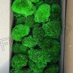 Стабилизированный мох в коробке