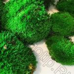 Зеленый мох кочками