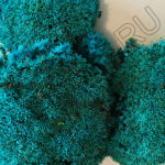 Мох синего цвета, кочки