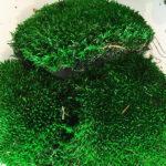 Мох зеленого цвета, кочки