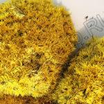 Мох желтого цвета, кочки