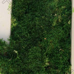 Стабилизированный мох пластами в коробке