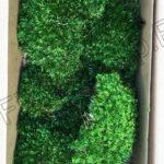 Стабилизированный мох Прованс в коробке