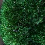 Стабилизированный мох Прованс зеленого цвета