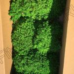 Стабилизированный мох сфагнум в коробке