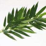 Веточка стабилизированного растения